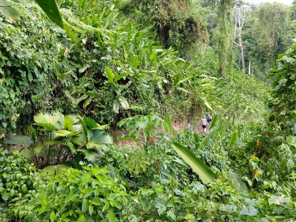 actief Costa Rica
