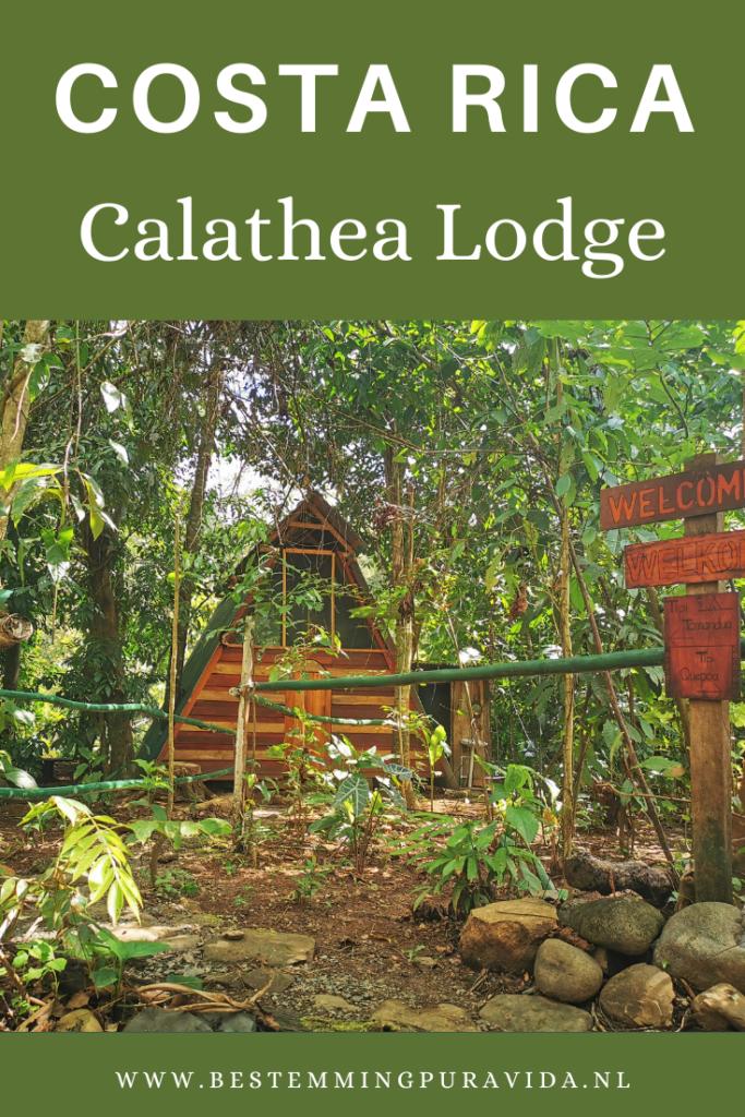 Calathea Lodge