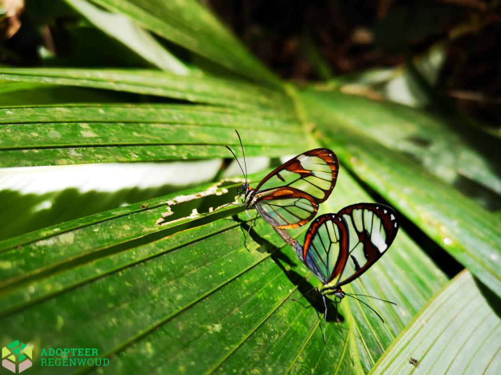 Adopteer Regenwoud Costa Rica